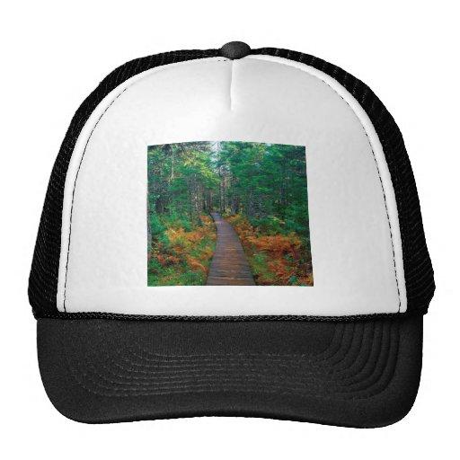 Tree Fundy National New Brunswick Hat
