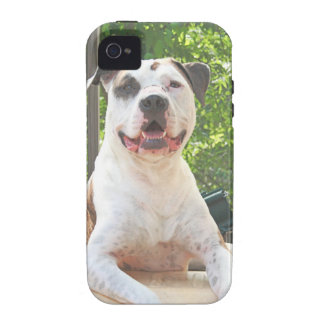 Tree House Pit Bull T-Bone iPhone 4/4S Cases