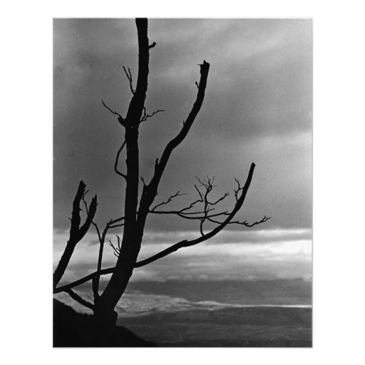 Tree on a Stormy Day Photo