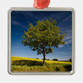 Tree, rape and blue sky / Baum, Raps und Himmel Christmas Ornament