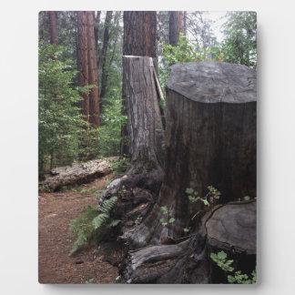 Tree Trunk Plaque