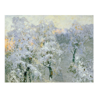 Trees in Wintry Silver, 1910 Postcard