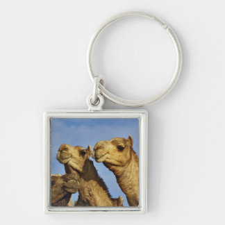 Trio of camels, camel market, Cairo, Egypt Silver-Colored Square Key Ring