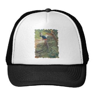 Trio of Lady Amherst's pheasant by waterfall Cap