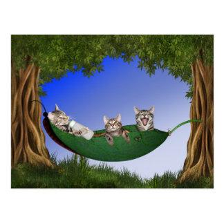 Triplet kitties postcard