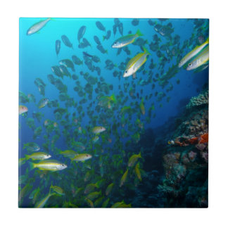 Tropical Fish Great Barrier Reef Coral Sea Tile