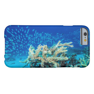 Tropical Fish on the Great Barrier Reef Barely There iPhone 6 Case
