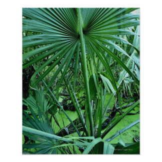 Tropical plants in salt pond poster
