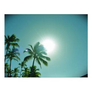 Tropical Sun Postcard