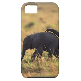Trunk of elephant touching offspring , Kenya , Case For The iPhone 5