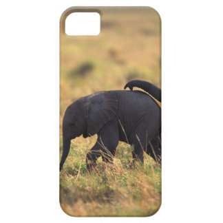 Trunk of elephant touching offspring , Kenya , iPhone 5 Case