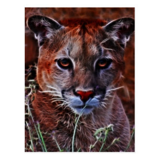 Trusted mountain lion postcard