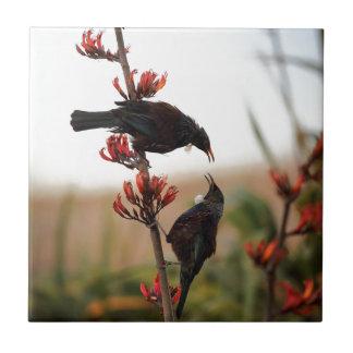 Tui birds on New Zealand flax bush Tile