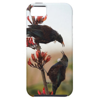 Tui birds on New Zealand flax bush Tough iPhone 5 Case