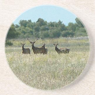 Tule Bull Elk Coaster