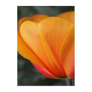 Tulip Acrylic Wall Art