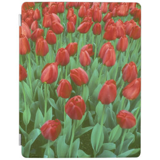 Tulip field blooms in the spring. iPad cover