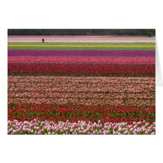 Tulip fields inspiration greeting card