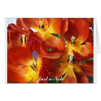 Tulip Profusion Note Card