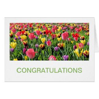 Tulips Congratulations Cards