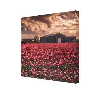 Tulips field Holland Landscape Single Canvas