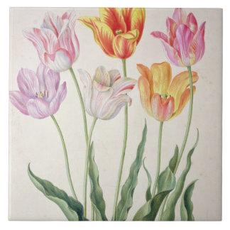 Tulips, from the 'Nassau Florilegium' (w/c on pape Tile