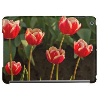 Tulips, Tulip Festival, Woodburn, Oregon, USA 1