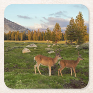 Tuolumne Meadow, Yosemite Square Paper Coaster