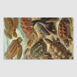 Turtle (Chelonia) by Haeckel Rectangle Sticker