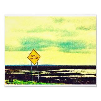 Turtle Crossing Photo Art