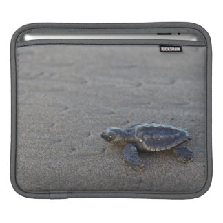 Turtle hatchlings iPad sleeve