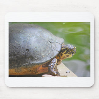 Turtle with Hard Shell Mouse Pad