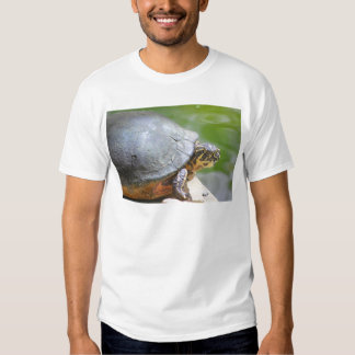 Turtle with Hard Shell Shirts