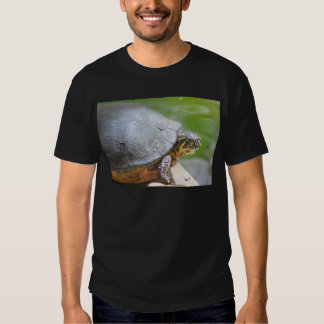 Turtle with Hard Shell T Shirts