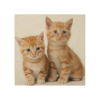 Two Adorable Kittens Wood Prints