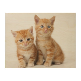 Two Adorable Kittens Wood Wall Decor
