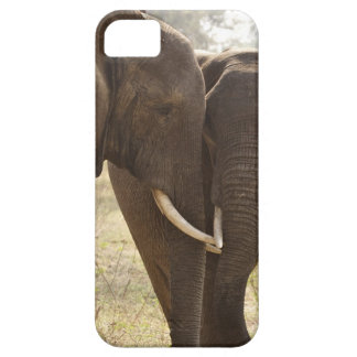 Two African Bush Elephants (Loxodonta Africana) iPhone 5 Cases