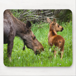 Two Alert Moose Mother And Baby Mouse Pad