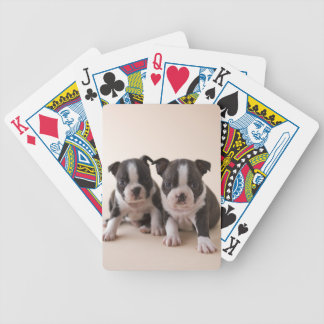 Two Boston Terrier Puppies Bicycle Playing Cards