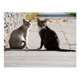 Two Cats in the Sun Postcard