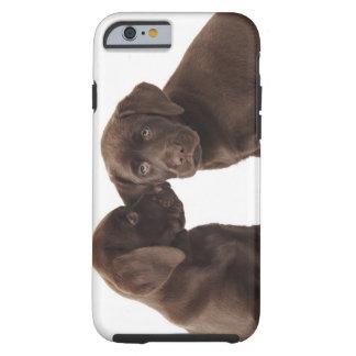Two chocolate Labrador Retriever Puppies Tough iPhone 6 Case