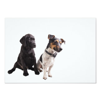 two cute little dogs card
