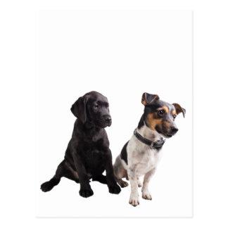 two cute little dogs postcard
