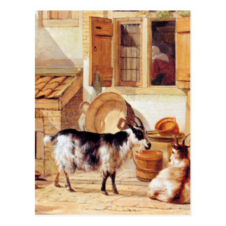 Two goats in a yard by Abraham van Strij Postcard