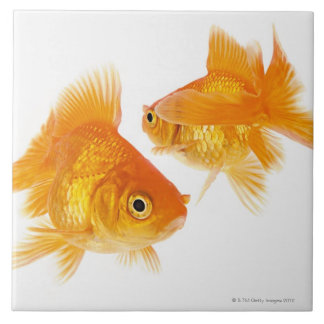 Two Goldfish Crossing Each Other Tile
