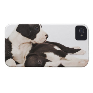 Two Harlequin Great Dane puppies on white iPhone 4 Cover