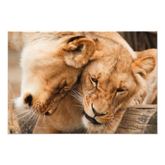 Two Lions Poster