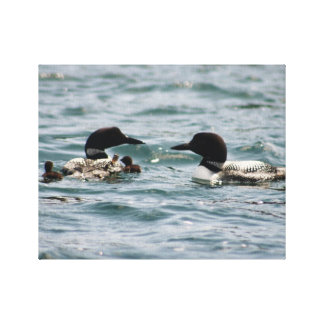 Two loons and two babies canvas print