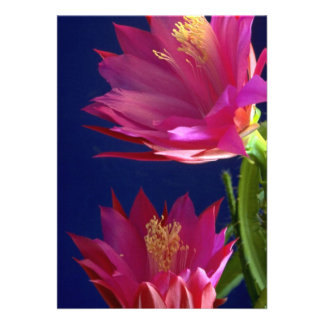 Two orchid cactus blooms announcement
