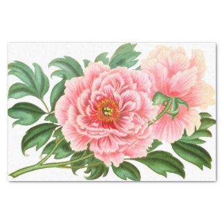 Two Pink Peonies Tissue Paper